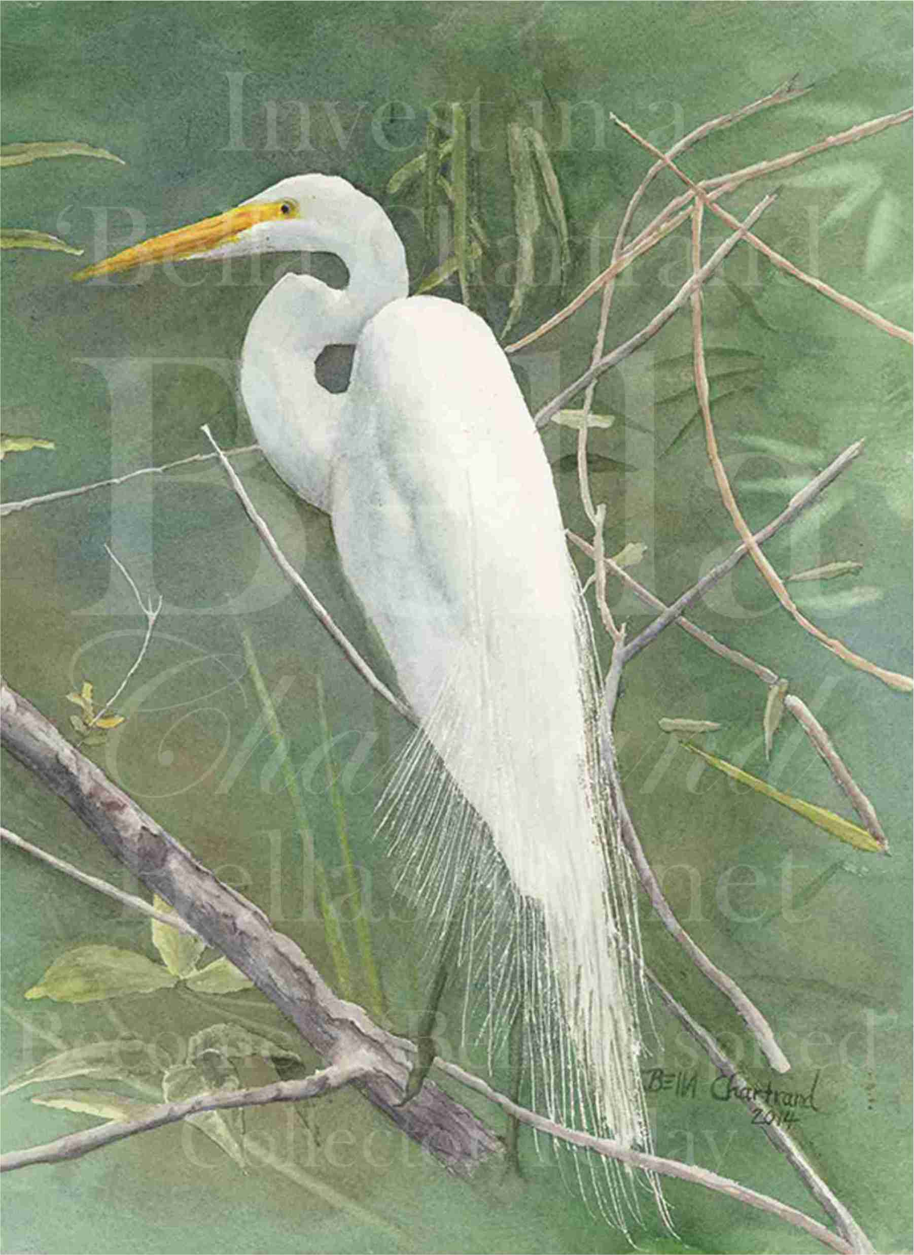 """Egret"" by Bella Chartrand from Utopia USA 2014"