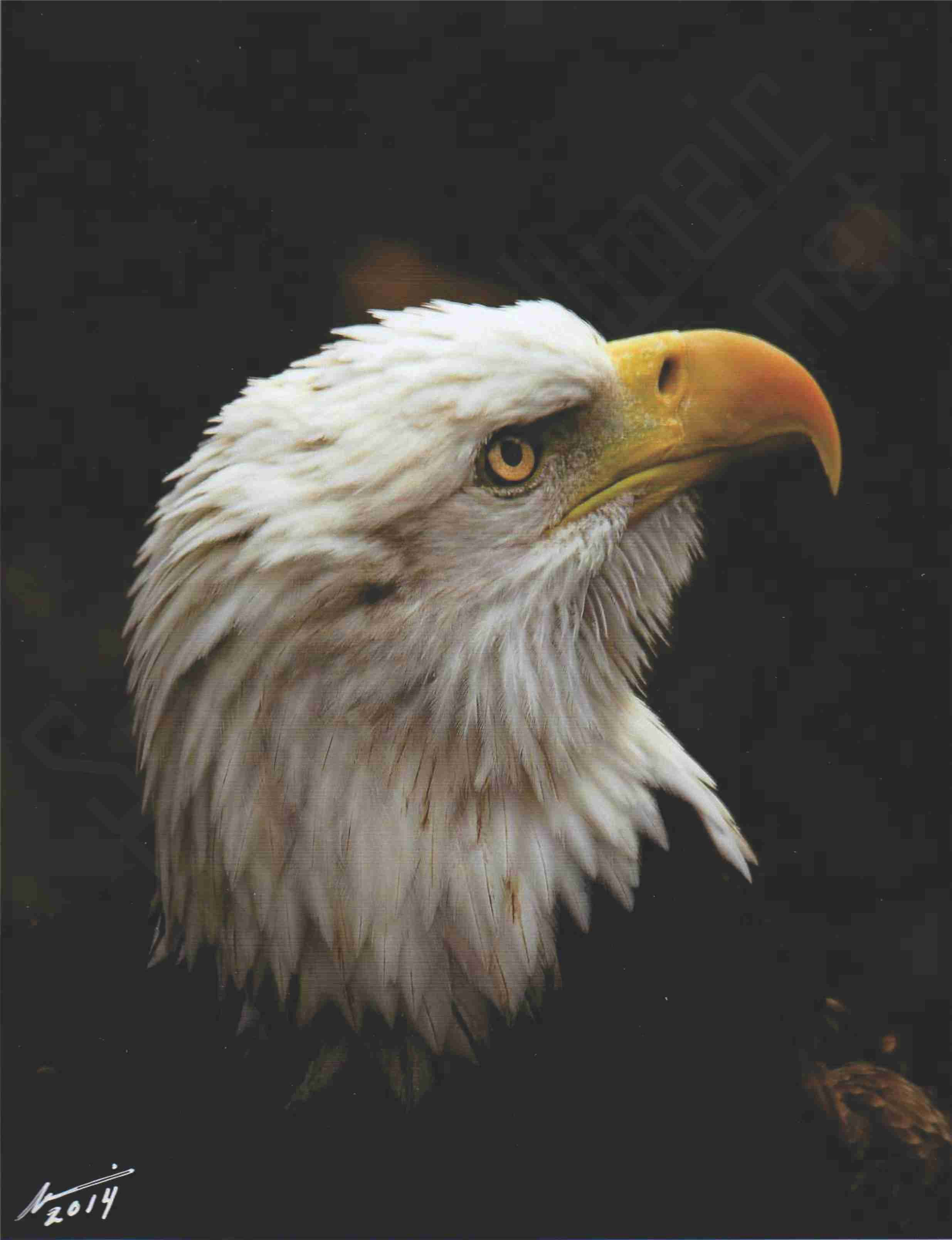 """wounded warrior"" photo by Wildlife Nature Conservationist Photographer; hodlmair@att.net; painting by Bella Chartrand"